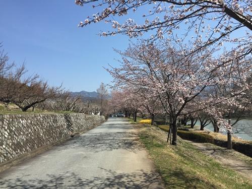 クウちゃんとお花見散歩(矢木羽湖)