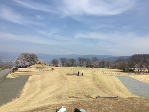 クウちゃんとお花見散歩(八代ふるさと公園)