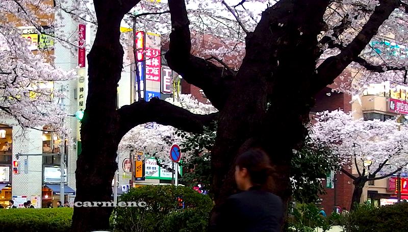 バス停の桜