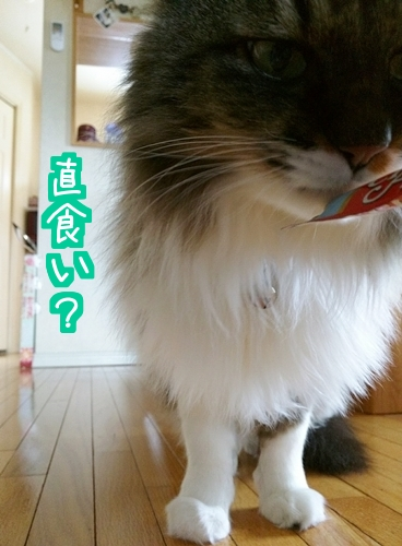 雛ちゅー1