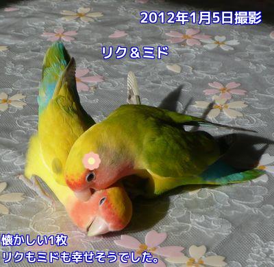 20160115094435f7c.png
