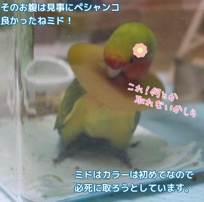201604020029432f3.png