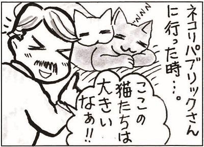 初めての猫カフェ2-1