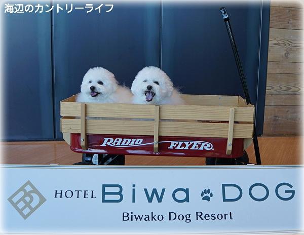 HOTEL Biwa*DOG♪