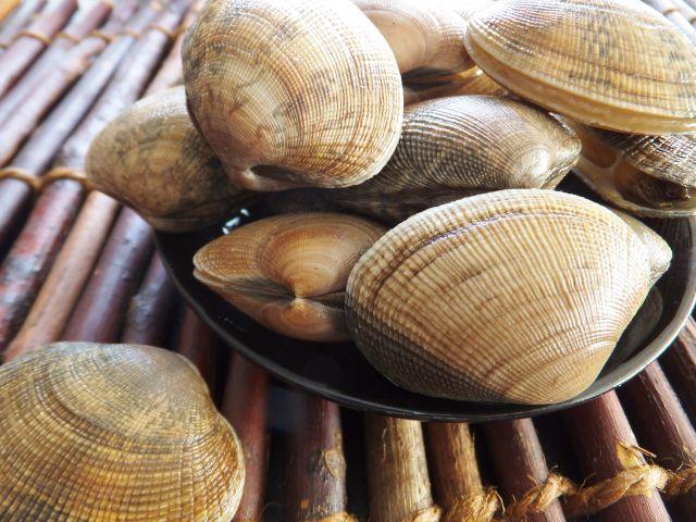 新鮮な貝を選ぶコツは?-死んでいる貝をつかまされないために