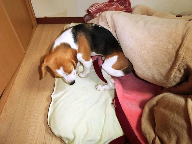 昨日は,夕食後にいつのまにか爆睡してしまったパパでした!