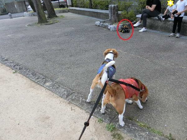 たくさんのお散歩友達と出逢えたTARO&JIROでした!