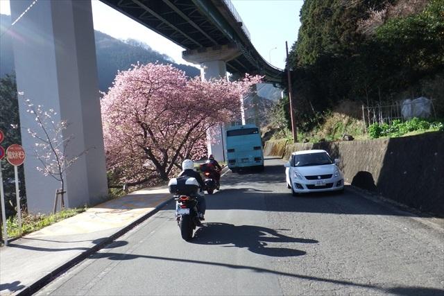 2016_kawazu(75).jpg