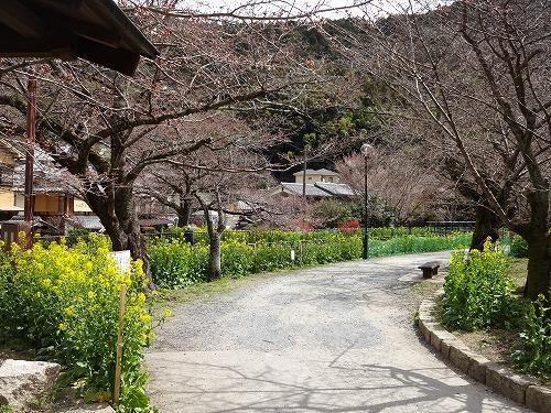 春には桜を見ておくか…