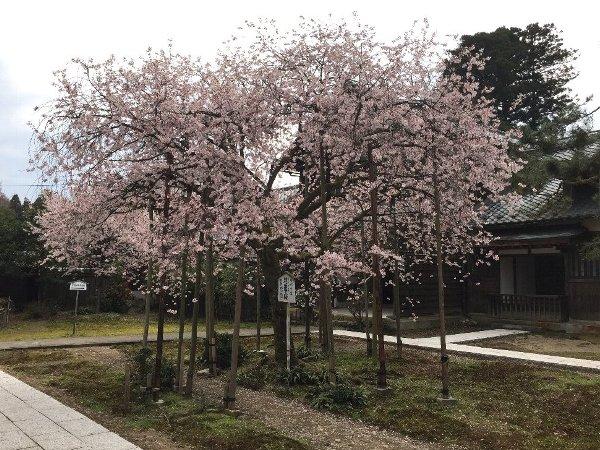 joufugi-005.jpg