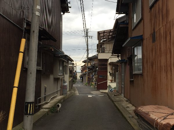 nishizu-obama-018.jpg