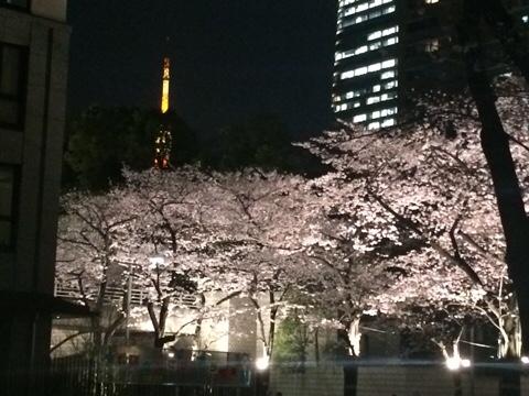 桜坂と高層ビルと東京タワー