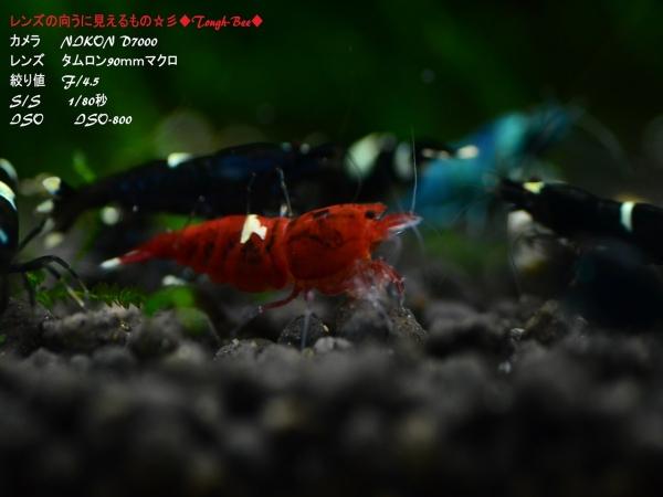 DSC_4387_R.jpg