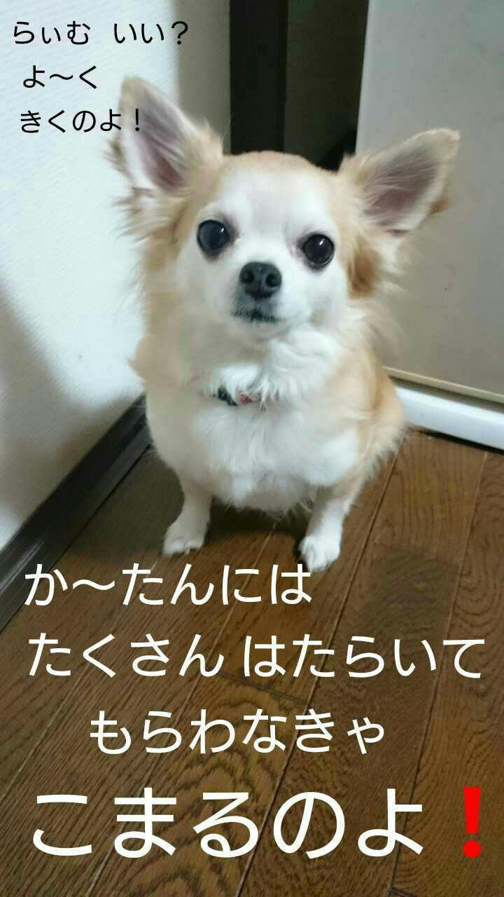 20160323215204188.jpg